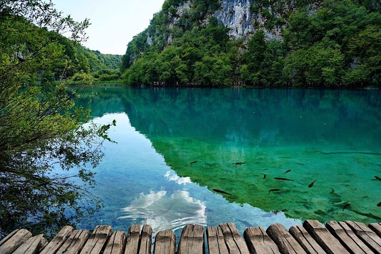Fish in the Water everywhere Plitvice Lakes National Park Plitvice National Park Tree Wood - Material Lake Lake View Landscape Nature Landscape_Collection Ladyphotographerofthemonth Shootermag Croatia Beauty In Nature Path Scenics Reflections In The Water Water Reflections Nature Travel Destinations Tranquility Tranquil Scene Eye4photography  Growth Breathing Space Investing In Quality Of Life The Week On EyeEm Been There. Connected By Travel The Great Outdoors - 2018 EyeEm Awards