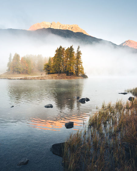 Water Tranquil Scene Beauty In Nature Tranquility Scenics - Nature Plant Sky Nature No People Lake Mountain Non-urban Scene Fog Idyllic Tree Day Reflection Growth Morning Autumn Larches Switzerland Silvaplana Graubünden