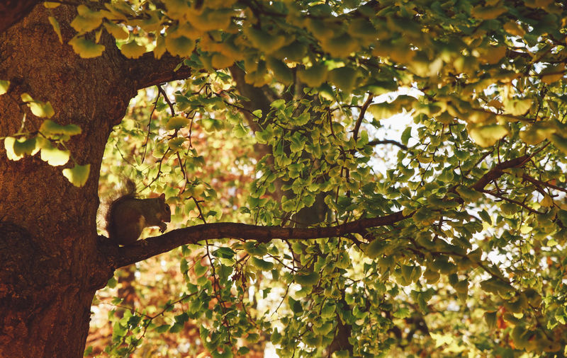 Squirrel Beauty In Nature Branch Close-up Day Forest Growth Nature No People Outdoors Park Sunset Tree