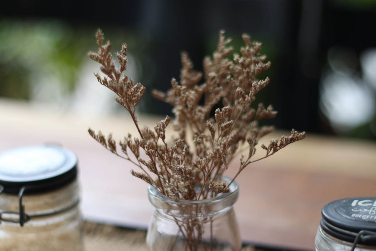 Close-up of dry plant in glass jar on table
