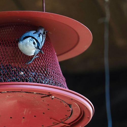 Bird Seed Olympus OM-D EM-1 40-150 Blue