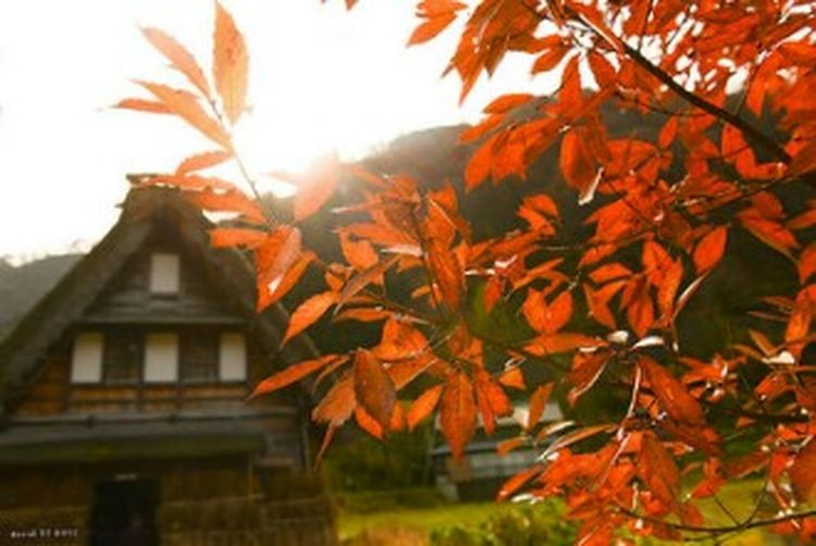 Autumn Leaf Built Structure Architecture Building Exterior Maple Leaf Outdoors No People Tree Day Nature Sky Tree