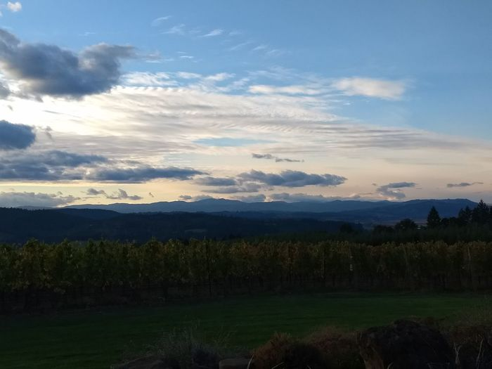 wine country at