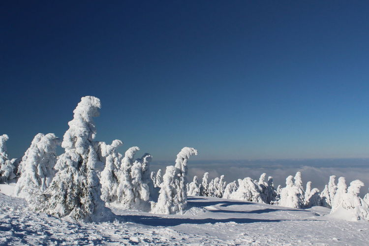 winter impressions of Nationalpark Harz Cold Temperature Snow Winter Nature Harz Brocken Trees Barks Of A Tree Sky Blue Scenics - Nature Clear Sky Copy Space Tranquil Scene Tranquility Beauty In Nature Landscape No People White Color Environment Frozen Ice Climate Snowcapped Mountain Purity