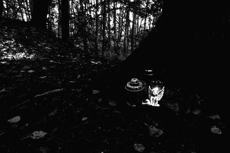 Grave light in forrest