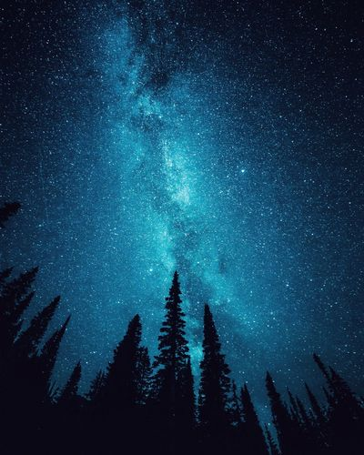 Star - Space Tree Night Space Astronomy Sky Low Angle View Nature Blue No People Silhouette Plant Galaxy Architecture Star Beauty In Nature Dusk Scenics - Nature Illuminated Star Field HUAWEI Photo Award: After Dark