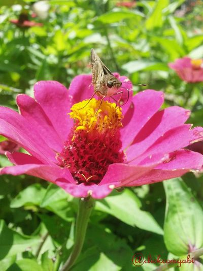 Butterfly First Eyeem Photo