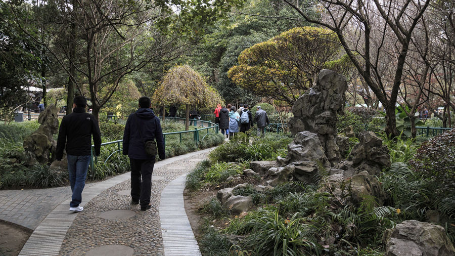 Chengdu, China - December 9, 2018: People walking in the urban park in Chengdu called people's park Chengdu China ASIA Peoples Park Plant Park Chinese People Tree Walking Rear View Real People Leisure Activity Nature Footpath Men Lifestyles Group Of People Full Length