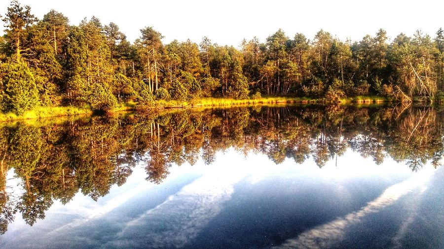 Sky And Clouds Sky_collection Mirror Effect Watermirror Nature Photography Jeseniky Mountains Tree Water