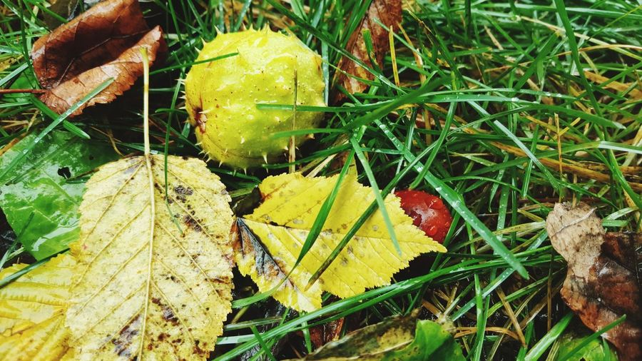 Leaf Day Green Color Nature Outdoors Growth Yellow No People Autumn Close-up Beauty In Nature Grass Freshness