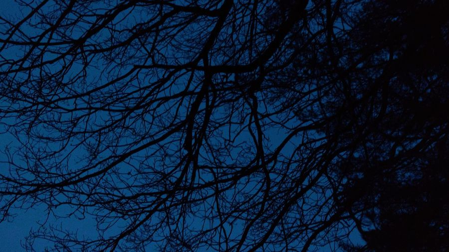 Sky Spooky Tree Trees Nature Branch Outdoors No People Scenics