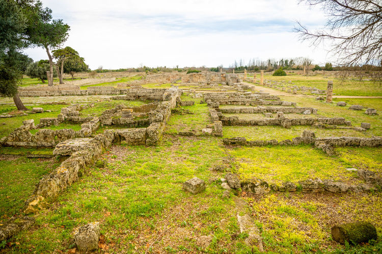 Italy Paestum Plant Landscape Sky Nature Land Field Environment Tranquility Grass No People Tree Green Color Tranquil Scene Day Growth Beauty In Nature Scenics - Nature Rural Scene Outdoors History