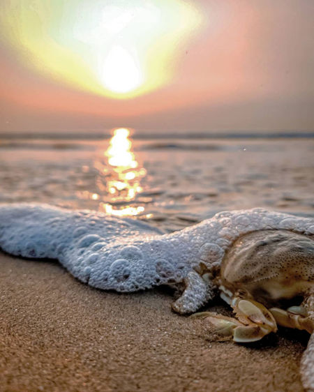 View of crab on beach during sunset