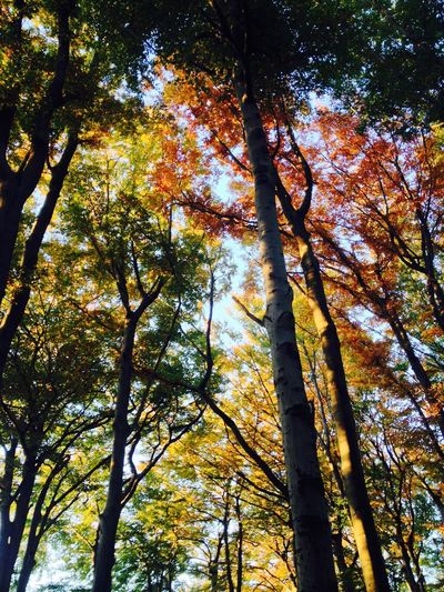 Autumn Colors Beauty In Nature Forest Forest Photography Green Color Growth Light Lothlórien Low Angle View Majestic Nature Outdoors Tranquility Tree Tree Love Tree Trunk WoodLand
