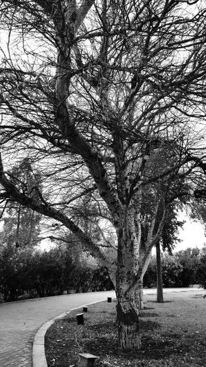 Tree Winter No Leafs Blackandwhite Photography Black And White