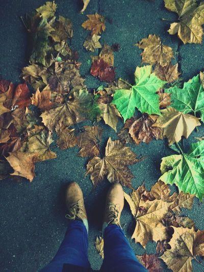 Caminando Autumn Otoño 🍁 Hojas Secas Hojas Shoes Colors Photography Viña Del Mar, Chile