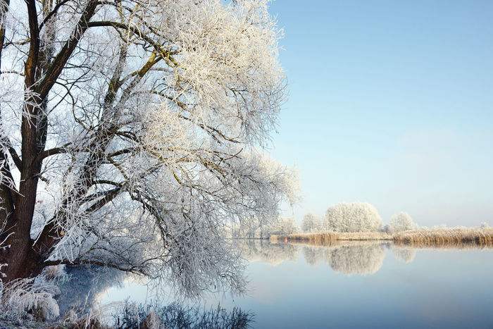 Havel River landscape on rime frost morning (Havelland, Germany) Brandenburg Frosty Frosty Mornings Havel Havel River Havelland Havelland Germany Havelradeweg Hoar Frost Hoarfrost Landscape Landscape_Collection Landscapes With WhiteWall Low Angle View Reflection Rime Rime Ice Rime On Tree Sky Tree Water Winter