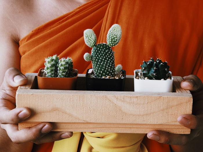 Midsection Of Monk Holding Potted Cacti In Wooden Container