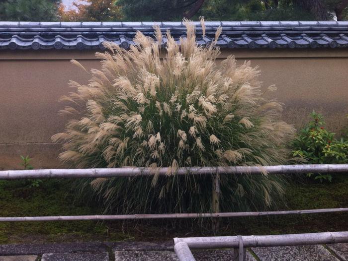 Kotoin at Daitokuj in Kyoto Autumn Beautiful Garden Kyoto, Japan Japanese Culture