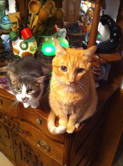 Cats Enjoying Life Cat Love Cats Of EyeEm Hello World Cat♡ Old Stuff Two Is Better Than One Feline