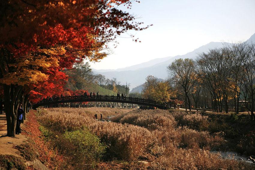 Munkyung Munkyungsaejae South Korea Reed Brook Autumn Autumn Foliage Autumn Colors Autumn Leaves Korea