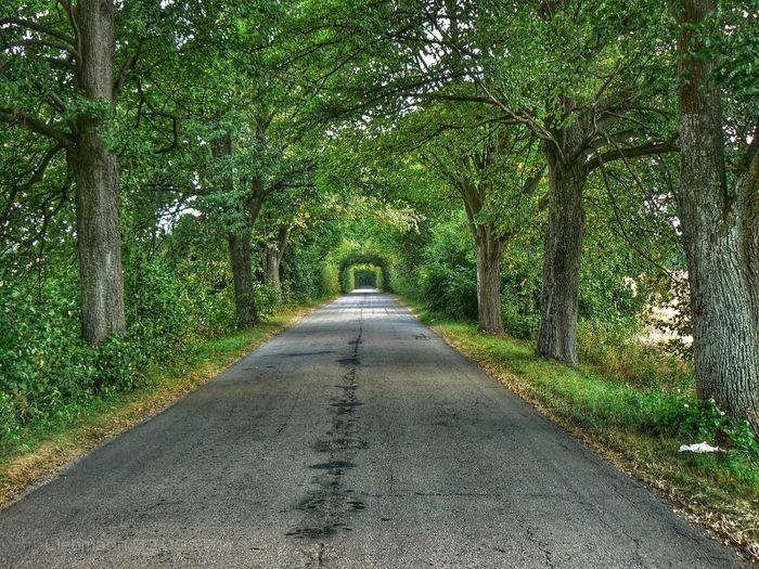 Traveling Hdr Edit Landscape Nature Masuren Streetphotography Allee