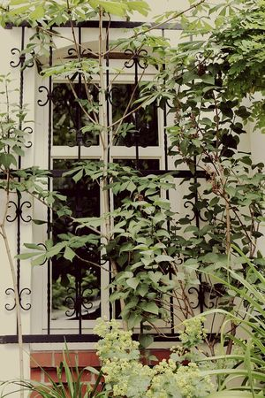Overgrown And Beautiful Overgrown Vintage Color Photography Ironwork  Windows_aroundtheworld Connected With Nature Let It Grow Nature Taking Over