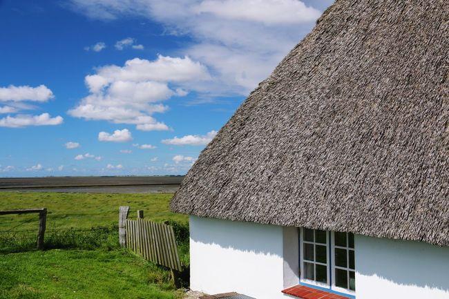 Auf Der Hamburger Hallig Haubarg Reetdachhaus Zaun Gras  Blauer Himmel Wolken Blue Sky Clouds Thatched Roof