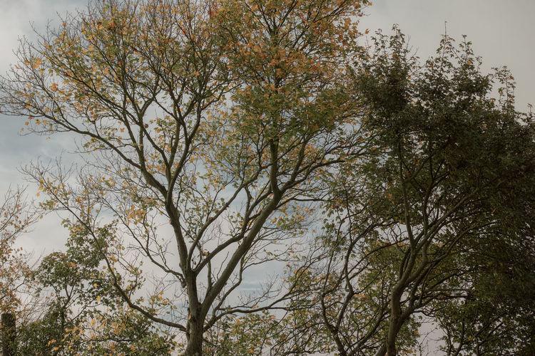 Laubbaum Autumn