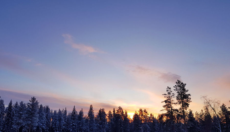Beautiful landscape of snowy winter forest and colorful sunset sky Twilight Winter Landscape Beauty In Nature Colorful Sky Coniferous Tree Environment Forest Growth Land Nature No People Non-urban Scene Pine Tree Plant Scenics - Nature Sky Snowy Snowy Forest Sunrise Sunset Tranquil Scene Tranquility Tree Winter Winter Forest