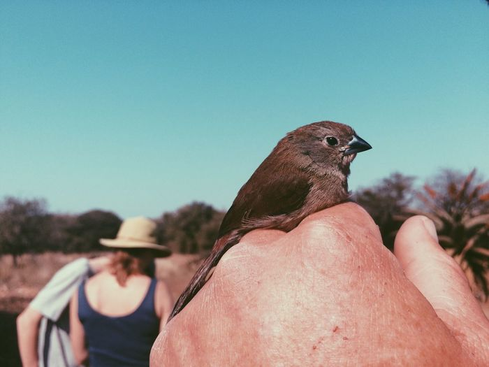 Bird Clear Sky Outdoors Nature Close-up Wildlife Fly Little Birdy Fly Sunny Day Happy Day EyeEm Selects