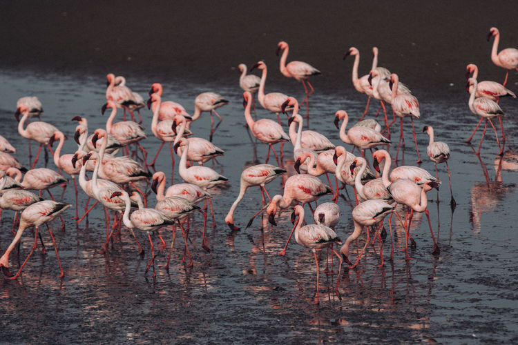 Flamingos perching on lake