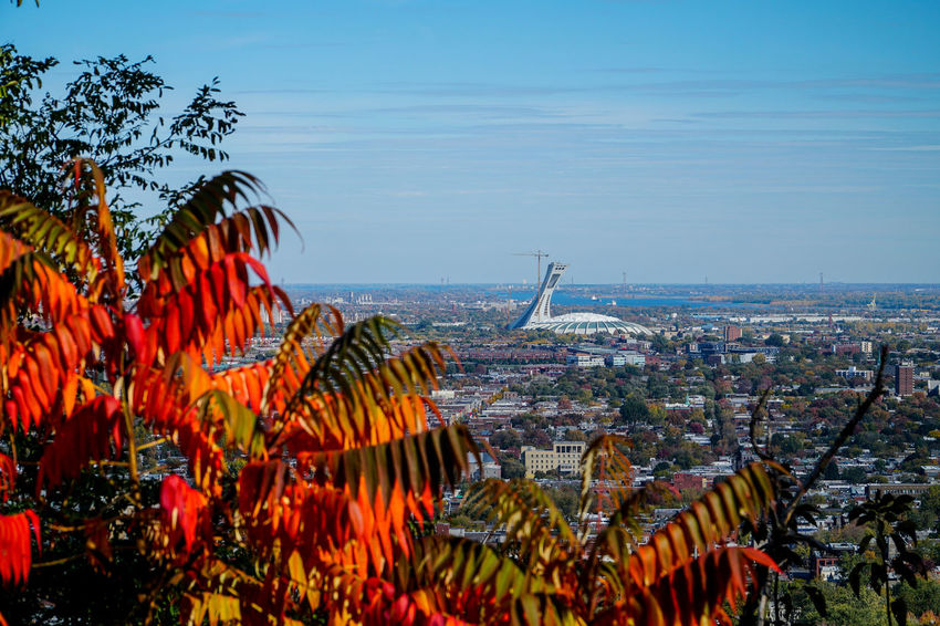 On more picture of the UFO 18-105mm Autumn Colors Autumn Leaves Blue Canada Coast To Coast City City Cityscapes Clear Sky Day Landscape Multi Colored Olympic Stadium Red Sky Sony A6300 UFO Urban Geometry Urban Landscape
