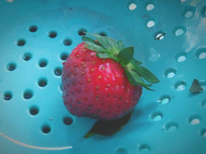fruit for