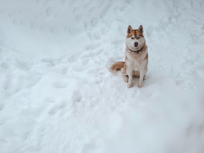 Mammal One Animal Animal Themes Snow Pets Animal Canine Dog Frozen Looking At Camera Vertebrate Cold Temperature Portrait No People Domestic Domestic Animals Winter Nature White Color Ice