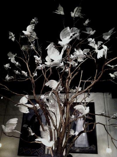 Paloma's en el arbol. Paloma Blanca. SA, TX Interior Design Art Installation