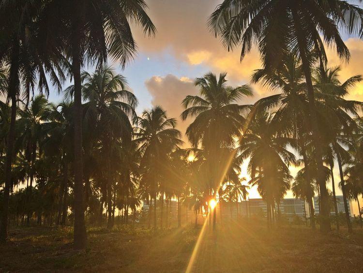 Beach Life Beautiful Palms Hot As Hell Beach Sunset Beautiful Nature Beautiful Colours.... Great Outdoors Nature Northeast Of Brazil