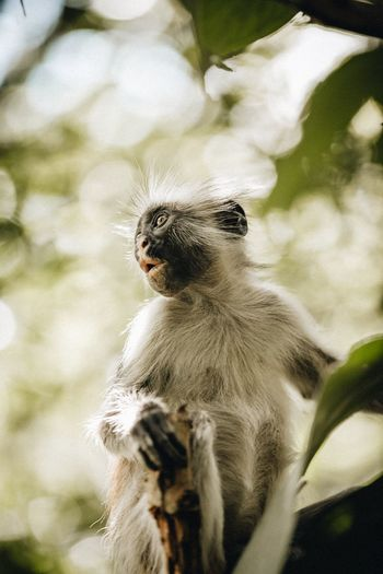 Ohh Animal Themes Animals In The Wild Animal Wildlife Animal One Animal Mammal Vertebrate Nature Looking Away Close-up Primate Looking No People Monkey Outdoors Day Low Angle View