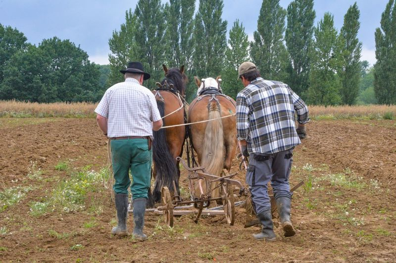 Agriculture Field Rural Scene Men Working Day Outdoors Growth Togetherness Farmer Nature Domestic Animals Occupation Tree Only Men Friendship Adult Ploughing People Mammal