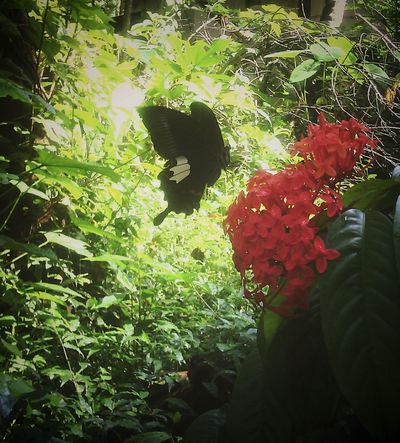 Butterfly ❤ 5mpcamera Phone Photography Nature Loving