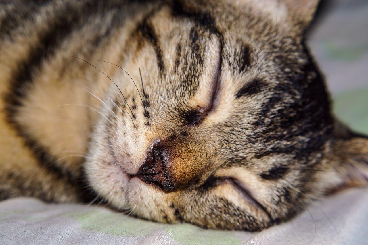 CLOSE-UP OF CAT SLEEPING OUTDOORS