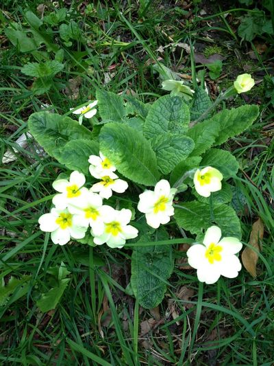 Beauty In Nature Blooming Day Flower Flower Head Fragility Freshness Grass Green Color Growth Nature No People Outdoors Petal Plant Spring Spring Collection Spring Colours Spring Flowers Spring Has Arrived Spring Into Spring Spring Is Coming  Spring Time Springtime Yellow