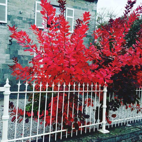 Quelque part dans Biesme...un jour d'automne 🎃 Biesme Ballade Nature Hello World Automne