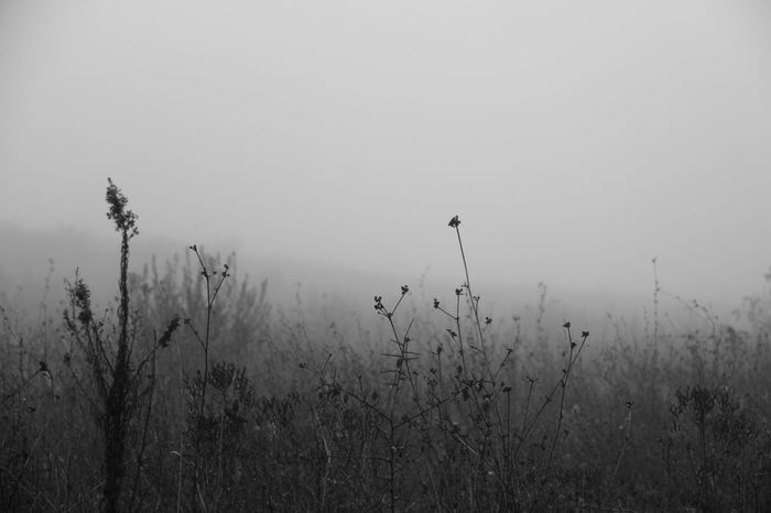 December Foggy GoodFellas_IMP EyeEm Best Shots The EyeEm Facebook Cover Challenge EyeEmBestPics December Landscape Sky Alone Solitude Outdoors Black And White Blancoynegro Nature Peaceful It's Cold Outside
