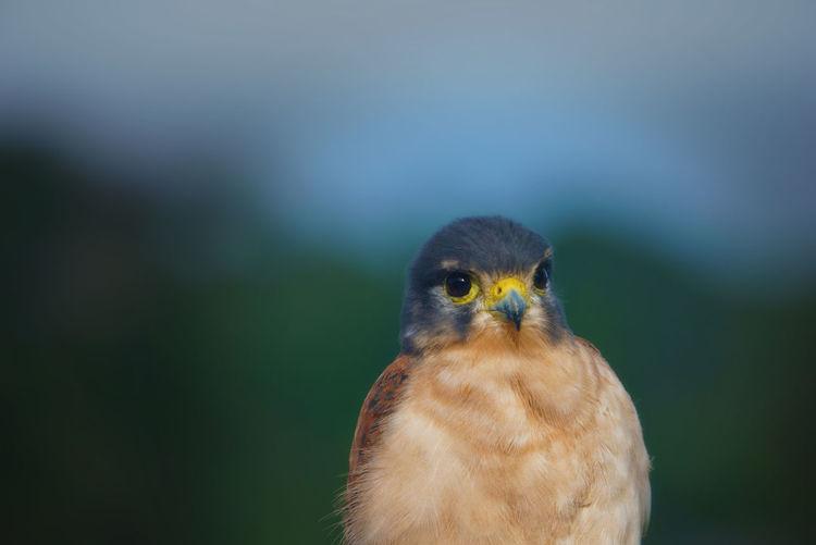 Close-up of a bird of prey