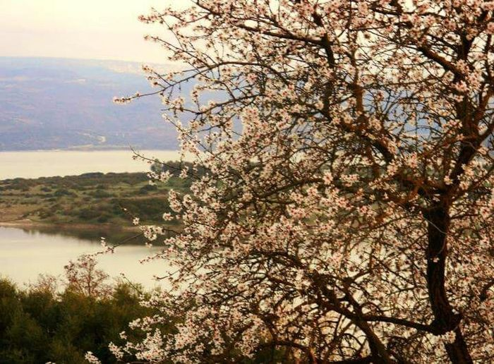 lake with almond tree.....spring flower blooming and everywhere (Haiku)...Taking Photos Hanging Out Nature EyeNatureLover Colours Of The Orient EyeEmFlower Sardegna Getting Inspired