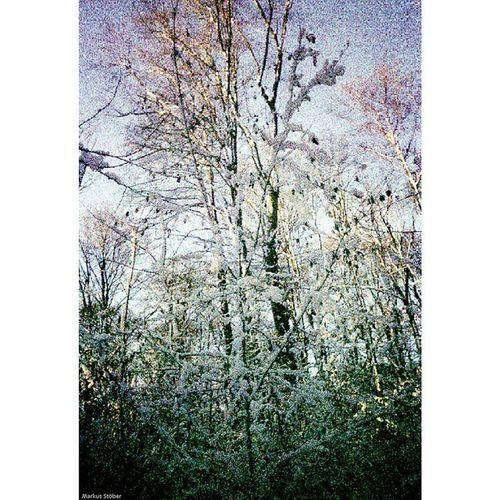 Squareinstapic @studio8apps Film Film135 Natur Natur Expired Expiredfilm Schnee Snow Winter Wald Forest Baum Tree