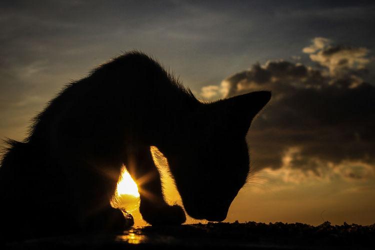 Meow Mammal No People Animal Wildlife Sky Cloud - Sky Sunset One Animal Cat Nature