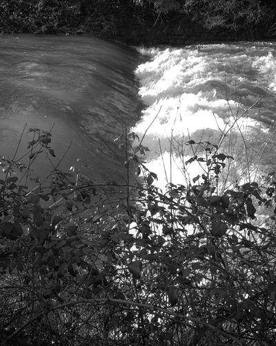 Rizana river