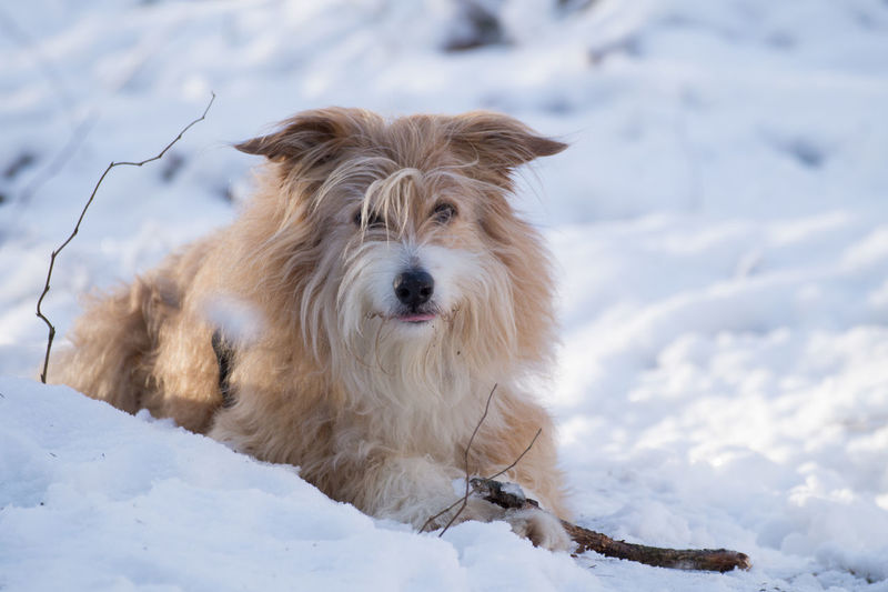 Winter Animal Themes Beauty In Nature Cold Cold Temperature Day Dog Domestic Animals Field Forest Mammal Nature No People One Animal Outdoors Pet Pets Snow Weather White Color Winter Wood - Material